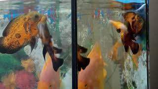 убийцы аквариумных рыбок