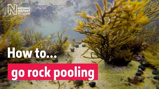 How to go rockpooling