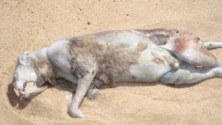 Montauk Monster - Facts and Myth