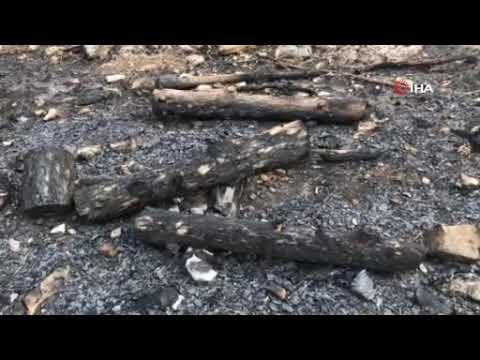 İbradı'da ağaçların kalbi söndürülüyor