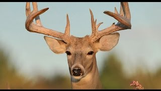 The Top 10 Best Deer Hunting States - and Worst!