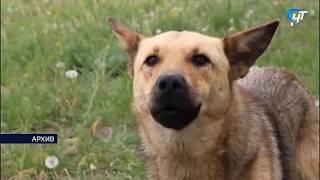 В Великом Новгороде заметно участились случаи нападения бродячих собак