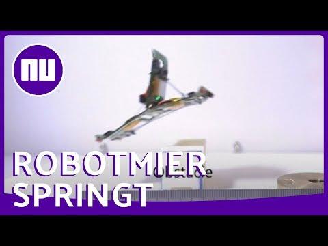 Zwitserse robotmieren springen over obstakels | NU.nl