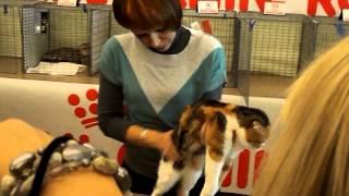 Выставка кошек. Краматорск 2012