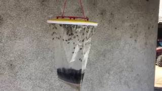 RED TOP vaba za muhe