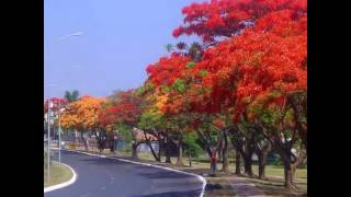 YingMei ft  Mạnh Quỳnh - LK: Phượng Buồn & Kỉ Niệm Nào Buồn