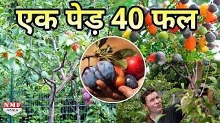 'Tree of 40' दुनिया के इस सबसे Amazing पेड़ पर लगते हैं 40 तरह के फल। Must Watch!!!