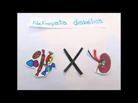 Constitución de la RF-diabetes
