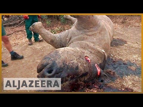 🇰🇪 Eight rhinos die in Kenya after relocation | Al Jazeera English