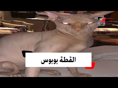 قطة ياسمين عبد العزيز «إسفينكس» !