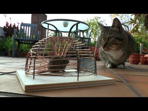 Mäusejagd auf dem Dachgarten