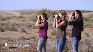 Birdwatching In Cyprus, Spring