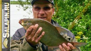 Ловля на фидер москва река лещ подлещик