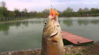 Рыбалка в новосвободной