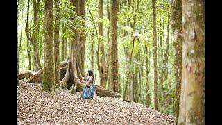 Yukta in the forest