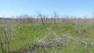 Сгоревшая лесопосадка возле Рудного