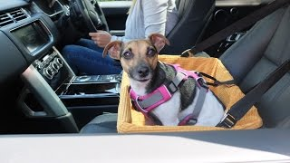 Dog Car Booster Seat Tutorial - The safest way to travel