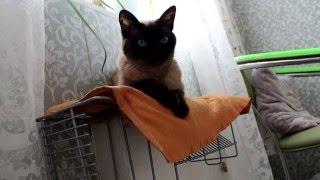 Как сделать кошке теплое место на батарее. Уход за кошкой.  Мягкая игрушка для кошки.