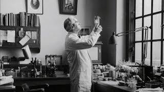 Penicillin - Discovery