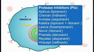 How ARVs Work (Part 3 of 3)