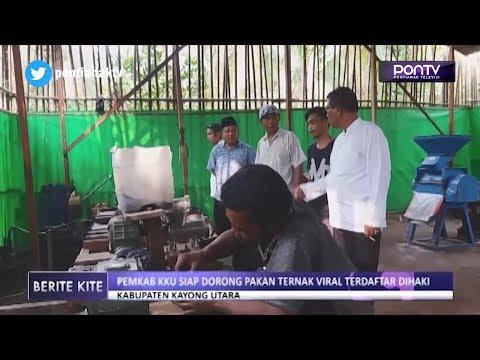 Pemkab Kayong Utara Siap Dorong Pakan Ternak Viral Terdaftar di HAKI
