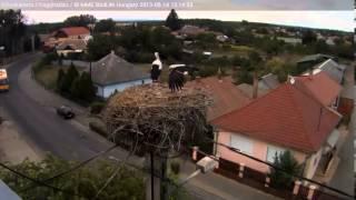 preview picture of video 'Nagyhalász, szerelmes Hajnal és Halász - 2013.08.14. 15:13'