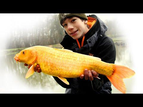 Vinterfiskeri efter brasen, koi karpe og guldfisk med method feeder