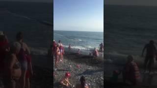 Канализационная труба приплыла на пляж в Адлере
