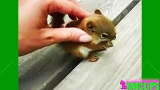 Cutest and Funniest Squirrel Videos Compilation