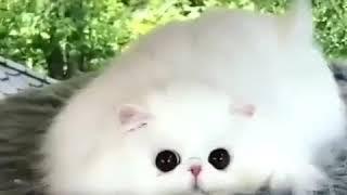 Самые милые котята 😻