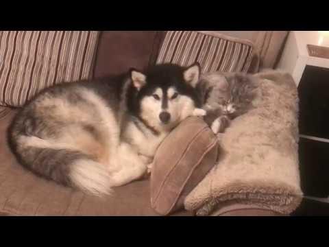 My cat grooms my dog??