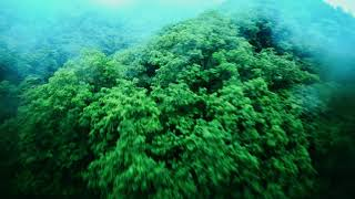 Rain and green Cinematic FPV ////雨と緑//// FPVドローン空撮
