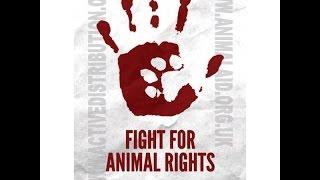 Animal Rights - Human Wrongs