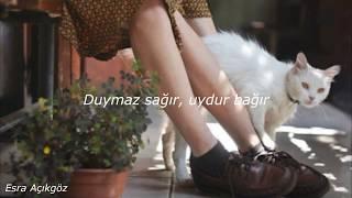 Nilipek & Can Kazaz   Kendi Halimde Lyrics