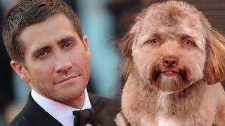 Viral di Internet, Anjing Ini Memiliki Wajah Seperti Manusia