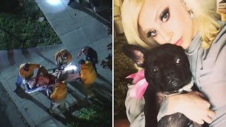 Lady Gaga's two French bulldogs found after being stolen at gunpoint
