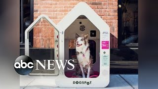 Air-conditioned dog houses are popping up across the country