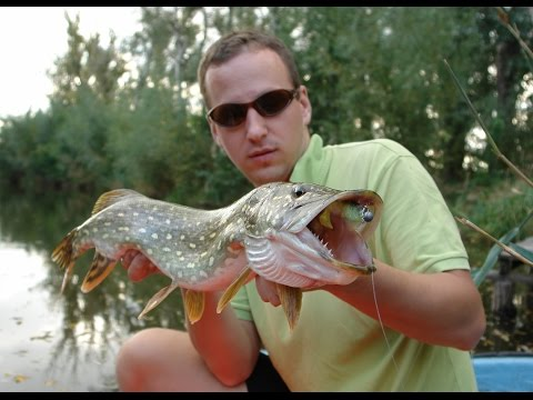 Ryby, rybky, rybičky – 23/2014, premiéra 7.11.2014