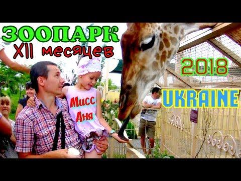 🦒 Зоопарк 12 месяцев 🇺🇦 с.Демидов Киевская обл.🐶Украина