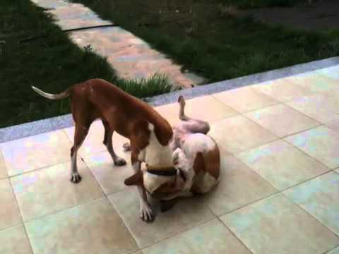 Honey FosterDog & Roxy UpSideDownDogg