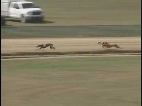 Race 67