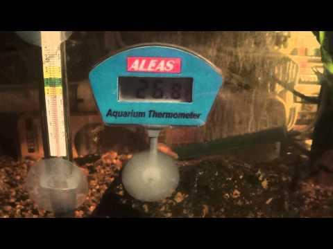 Termómetro Clásico vs Termómetro Digital