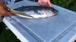 How to Fillet Albacore Tuna
