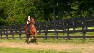2yr old filly