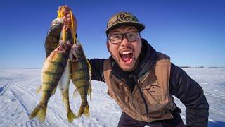 INSANE JUMBO PERCH Ice Fishing! (CATCH CLEAN COOK)
