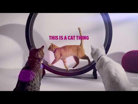 Cheristin for Cats - 3 Doses Video