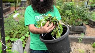 The First Steps to Composting - with Costa Georgiadis
