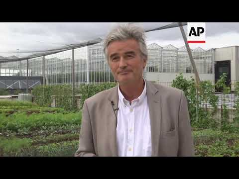 U Briselu se riba i povrće uzgajaju na krovovima