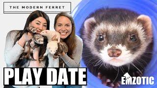 FERRET PARTY! Bonus Weasels Meet 'The Modern Ferret'