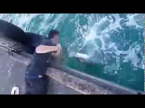 「徒手釣大魚」高手釣魚是不需要釣竿的